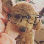 5 ways my dog makes me more productive